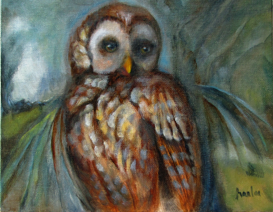 Barred Owl 10x9